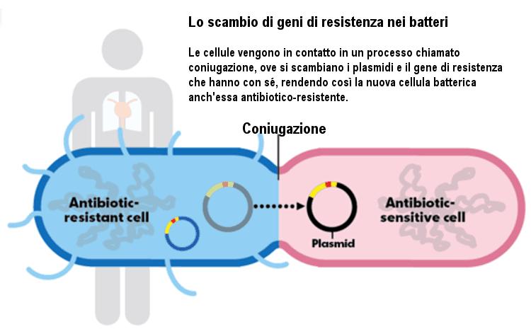 trasferimento-antibiotico-resistenza